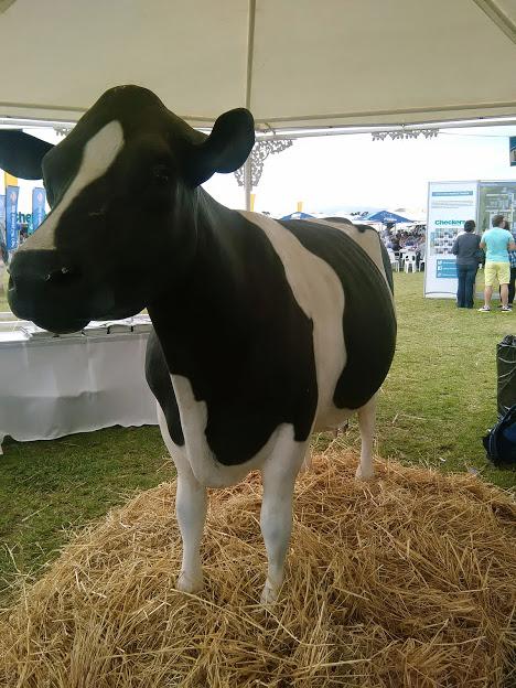 Blossom the Cow